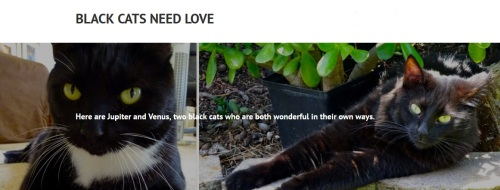black-cats-need-love